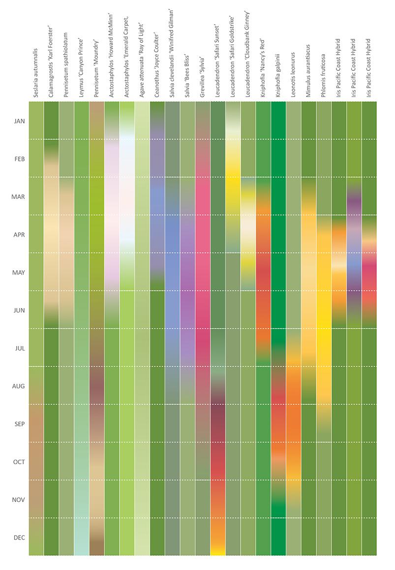 Bloom Chart