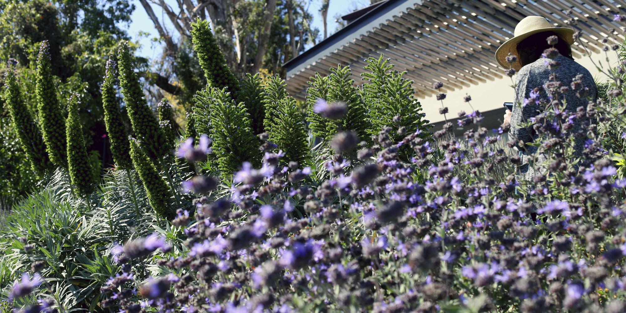 Stephen_Billings_Landscape_Architecture_Santa_Monica_2
